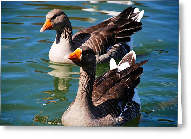Twins Greeting Card by Linda Segerson