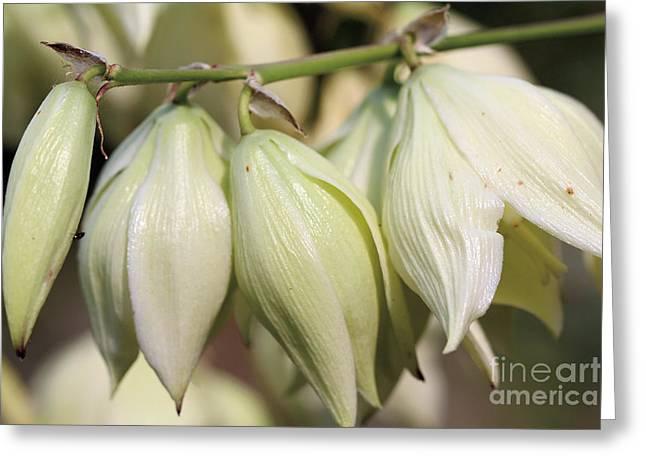 Twist-leaf Yucca Greeting Card