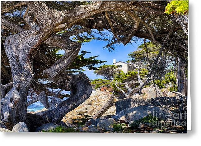 Twisted Cypress Trees  Greeting Card by George Oze