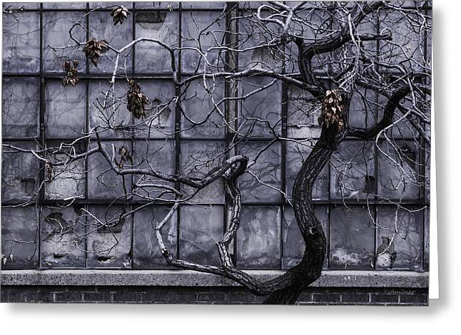 Twisted Decay - Abstract Metaphor  Greeting Card by Steven Milner