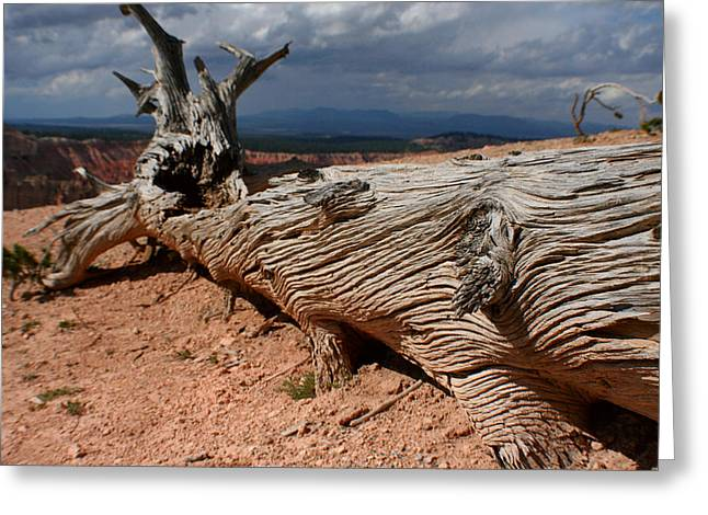 Greeting Card featuring the photograph Twisted by Jon Emery