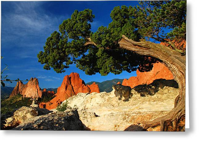 Twisted Juniper At The Garden Greeting Card by John Hoffman