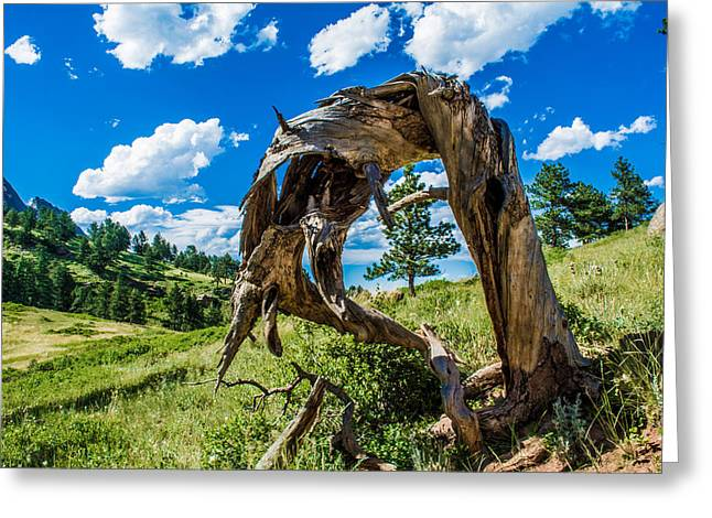 Greeting Card featuring the photograph Twisted Pine by Rhys Arithson