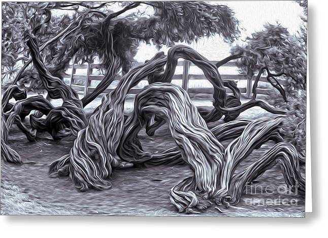 Twisted Tree - 01 Greeting Card by Gregory Dyer