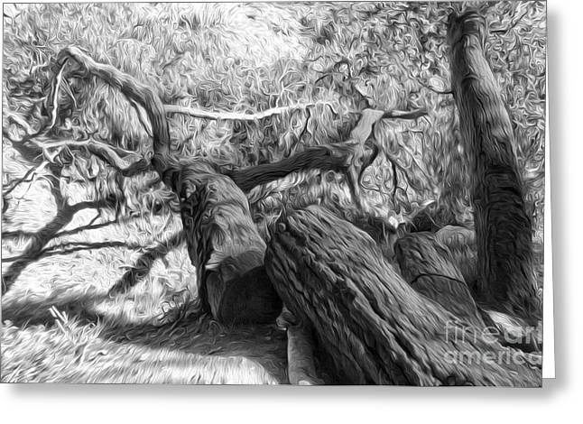 Twisted Tree - 03 Greeting Card by Gregory Dyer