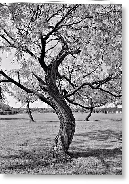 Twisted Tree Greeting Card by Elizabeth Budd