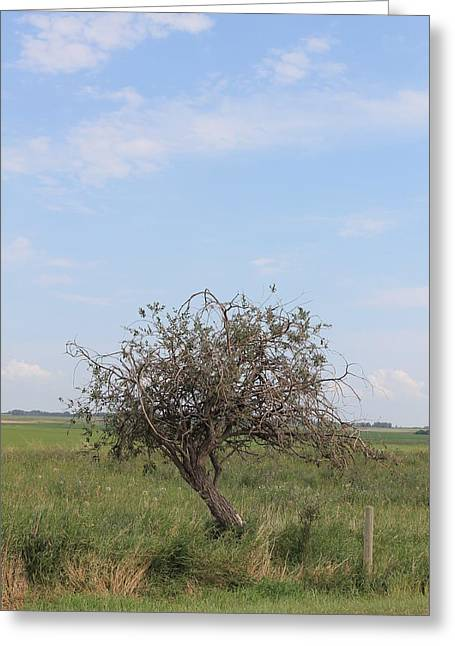 Twisted Tree Greeting Card by Susan Copley