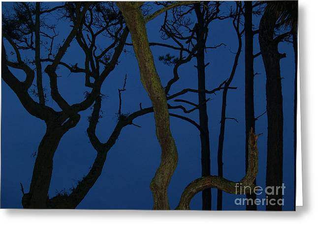 Twisted Trees At Twilight Greeting Card by Anna Lisa Yoder
