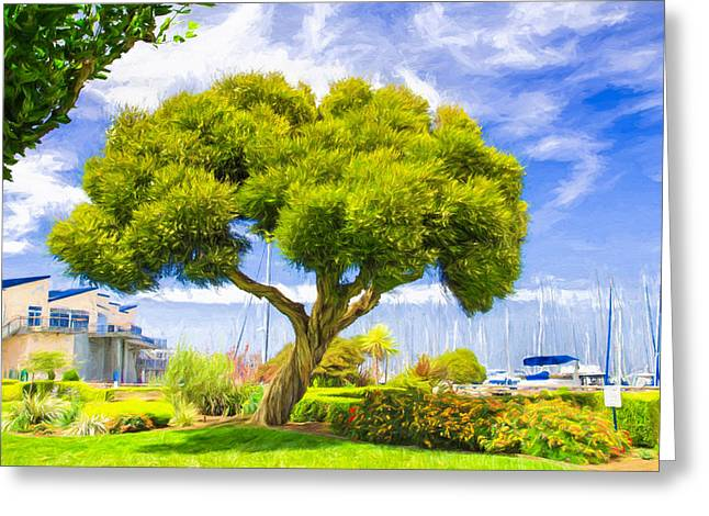 Twisted Trunk At Pier 39 Greeting Card by John M Bailey