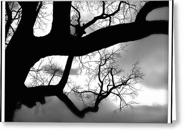 Twisty Tree Silhouette Greeting Card