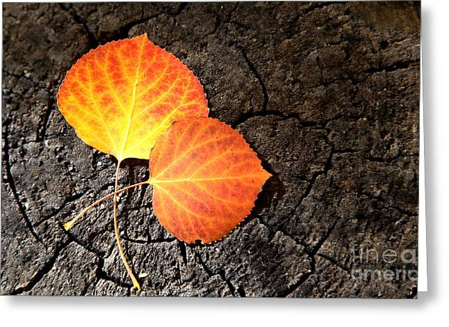 Two Aspen Leaves Greeting Card