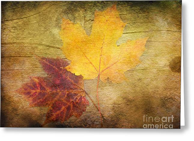 Two Autumn Leaves Greeting Card