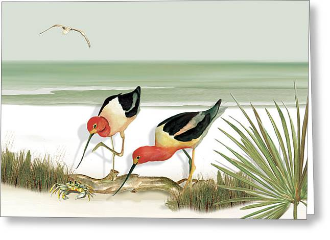 Two Avocets Greeting Card