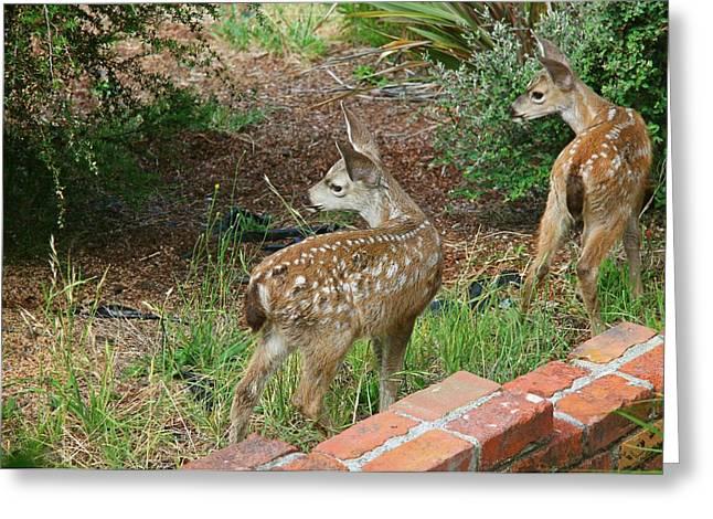 Two Baby Deer Greeting Card by Sheila Savage