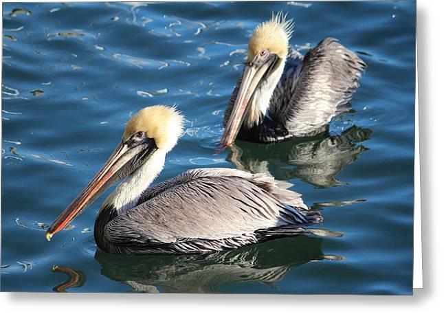 Two Beautiful Pelicans Greeting Card by Cynthia Guinn