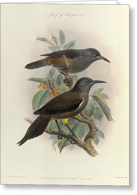 Two Birds Of Hawaii Greeting Card by British Library