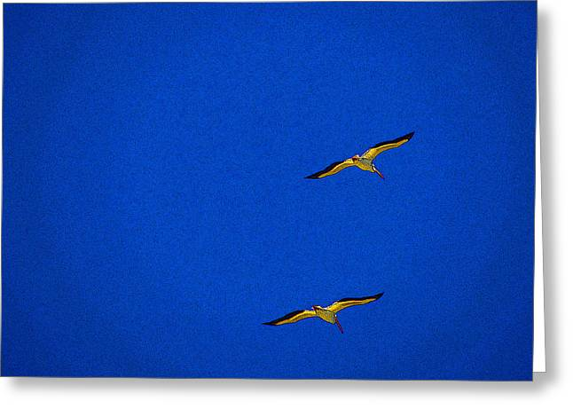 Greeting Card featuring the photograph Two Blue by Tom DiFrancesca