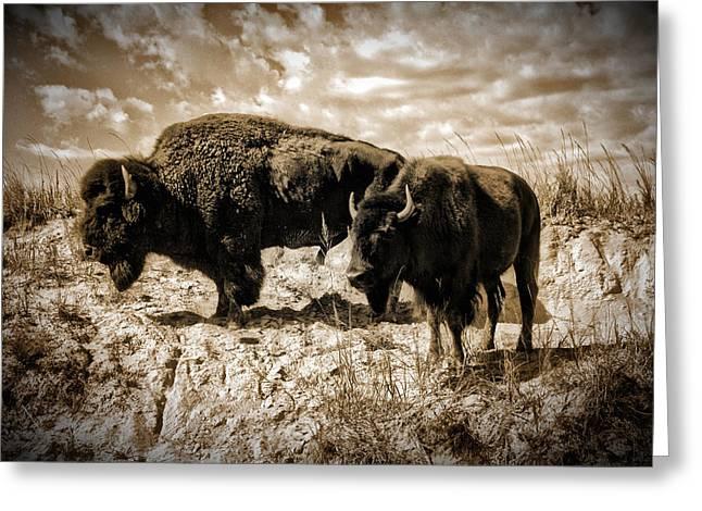 Two Buffalo Greeting Card