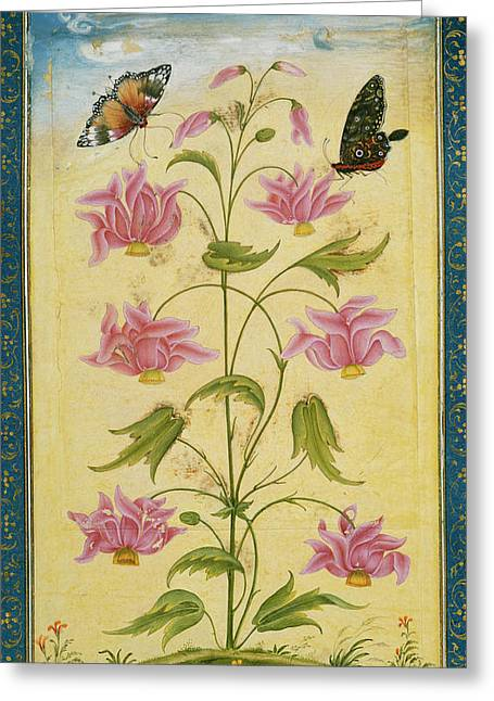 Two Butterflies On A Plant Greeting Card by British Library