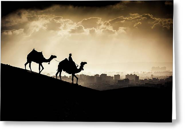 Two Camels And A Rider Walk In Front Greeting Card by Matt Brandon