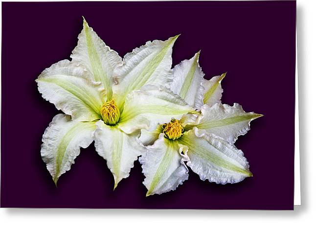 Two Clematis Flowers On Purple Greeting Card by Jane McIlroy