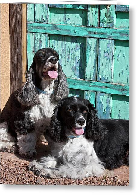 Two Cocker Spaniels In Front Of An Old Greeting Card by Zandria Muench Beraldo