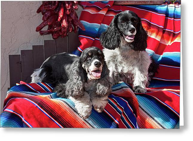 Two Cocker Spaniels Together Greeting Card by Zandria Muench Beraldo