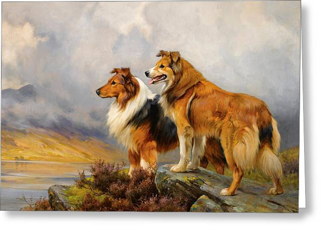 Two Collies Above A Lake Greeting Card by Wright Barker