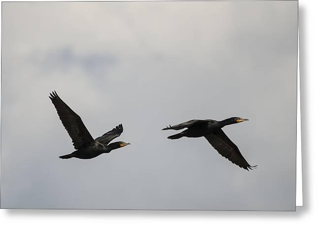 Two Cormorants In Flight Greeting Card by Loree Johnson