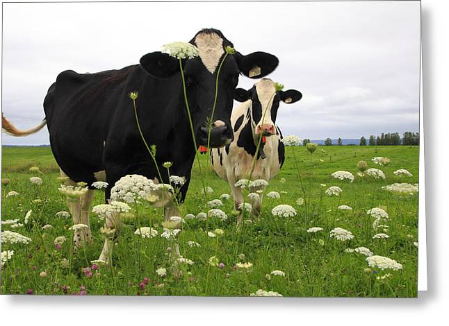 Two Cows In A Field Greeting Card