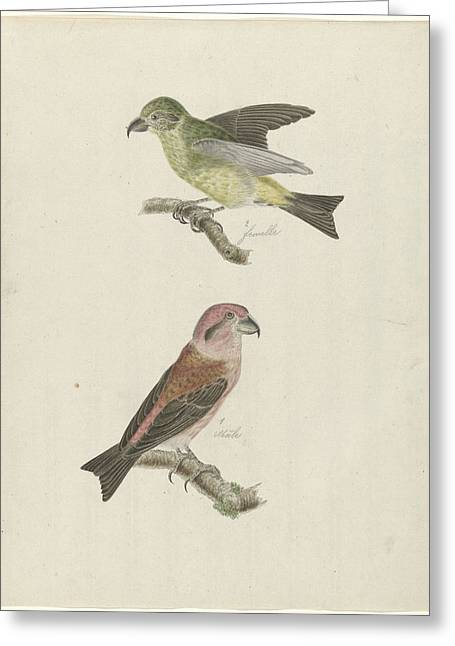 Two Crossbills, Possibly Christiaan Sepp Greeting Card