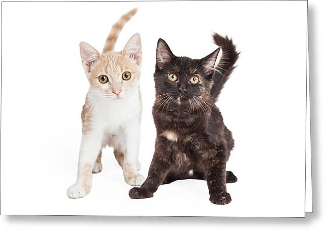 Two Cute Kittens Together Greeting Card by Susan Schmitz