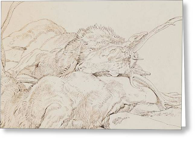 Two Dead Stags Greeting Card by Sir Edwin Landseer