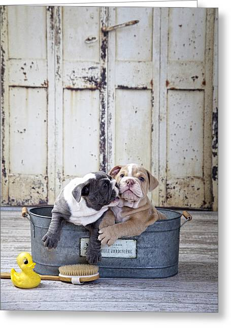 Two Dogs In Tub Greeting Card by Lisa Jane