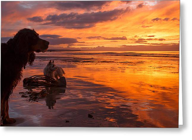 Two Dogs Look Out To Sea During An Amazing Beach Sunset. Greeting Card by Izzy Standbridge