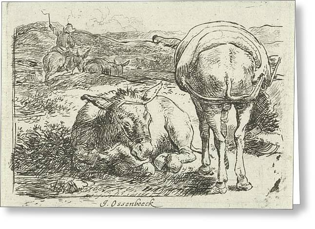 Two Donkeys, Print Maker Jan Van Ossenbeeck Greeting Card by Jan Van Ossenbeeck