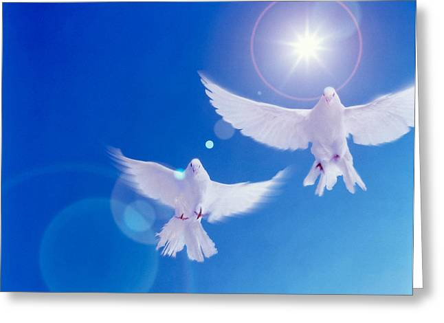 Two Doves Side By Side With Wings Greeting Card