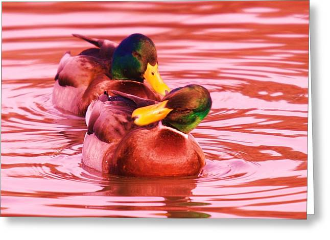 Two Drakes  Greeting Card by Jeff Swan
