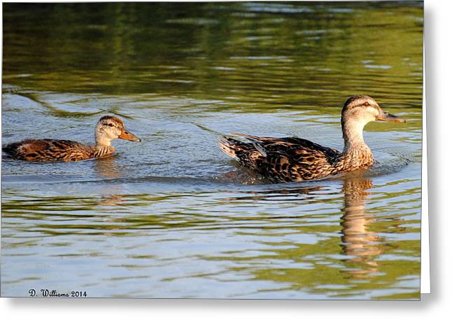 Two Ducks Swimming Greeting Card