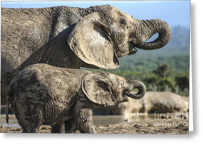 Two Ellies Drinking Greeting Card