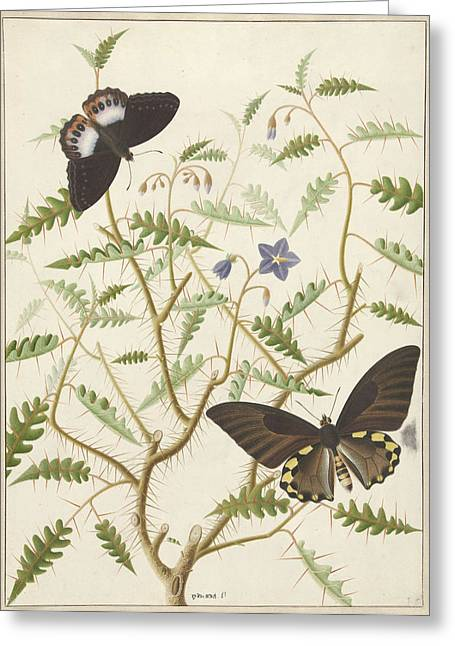 Two Exotic Butterflies On A Blooming Bush Greeting Card by Quint Lox