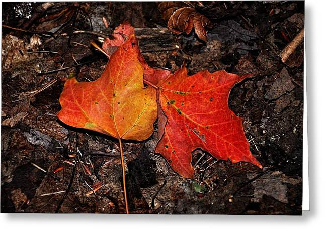 Two Fallen Autumn Leaves Greeting Card