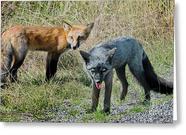 Two Fox Seattle Greeting Card
