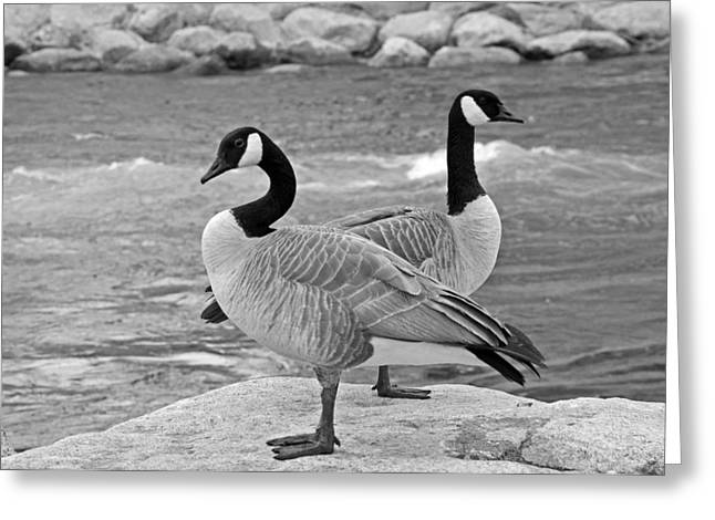 Two Geese In Black And White Greeting Card