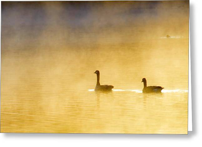 Two Geese Greeting Card by Tommytechno Sweden