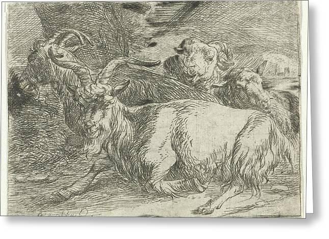Two Goats And Two Sheep, Jan Van Ossenbeeck Greeting Card by Jan Van Ossenbeeck