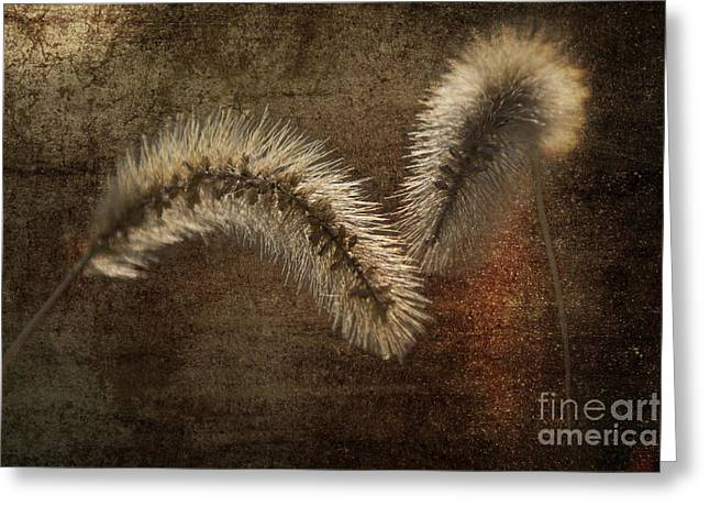 Two Grass Flowers Greeting Card by Heiko Koehrer-Wagner