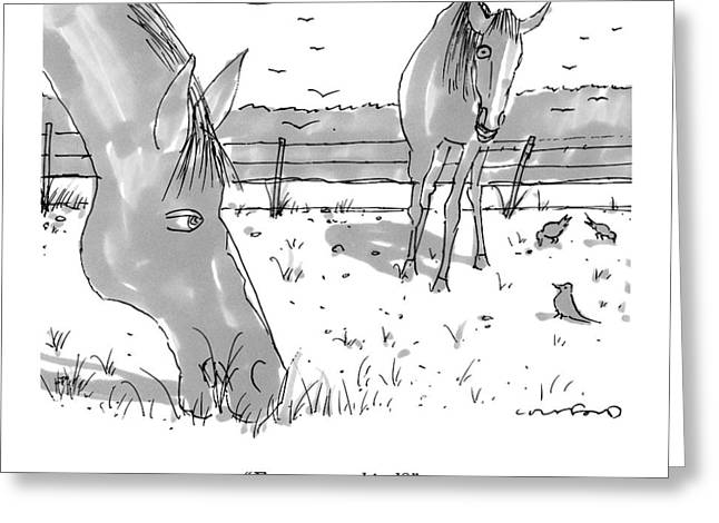 Two Grazing Horses. A Few Birds Peck Nearby Greeting Card