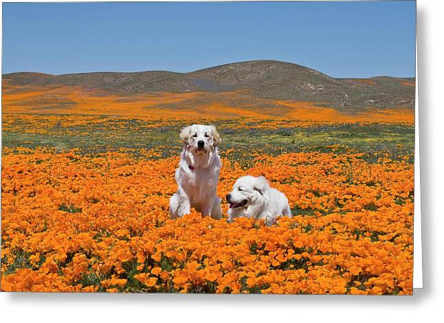 Two Great Pyrenees Together In A Field Greeting Card by Zandria Muench Beraldo