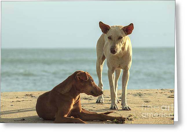 Two Homeless Dogs On The Beach Greeting Card
